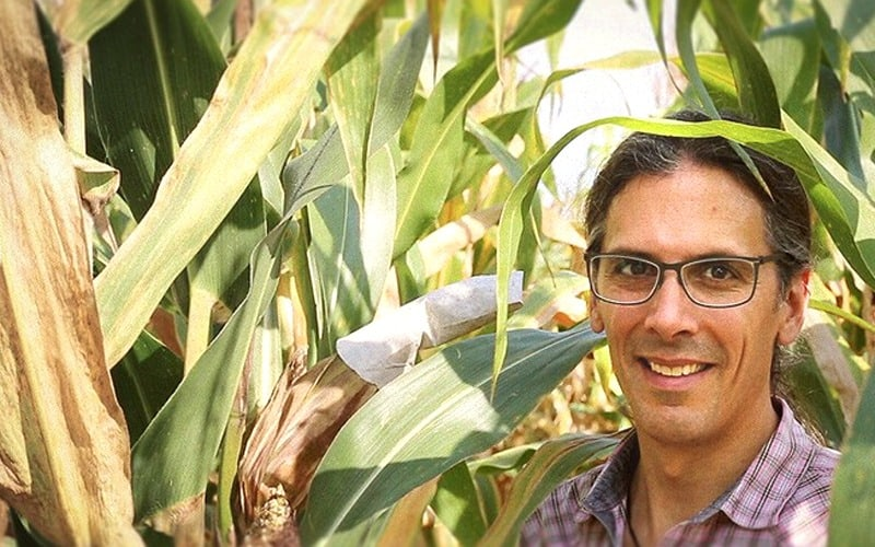 Defending corn