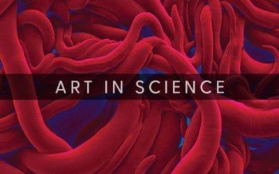 Art In Science