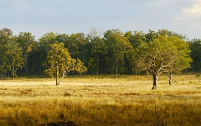 Assessing forests from afar