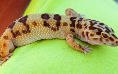 Gecko Stickiness